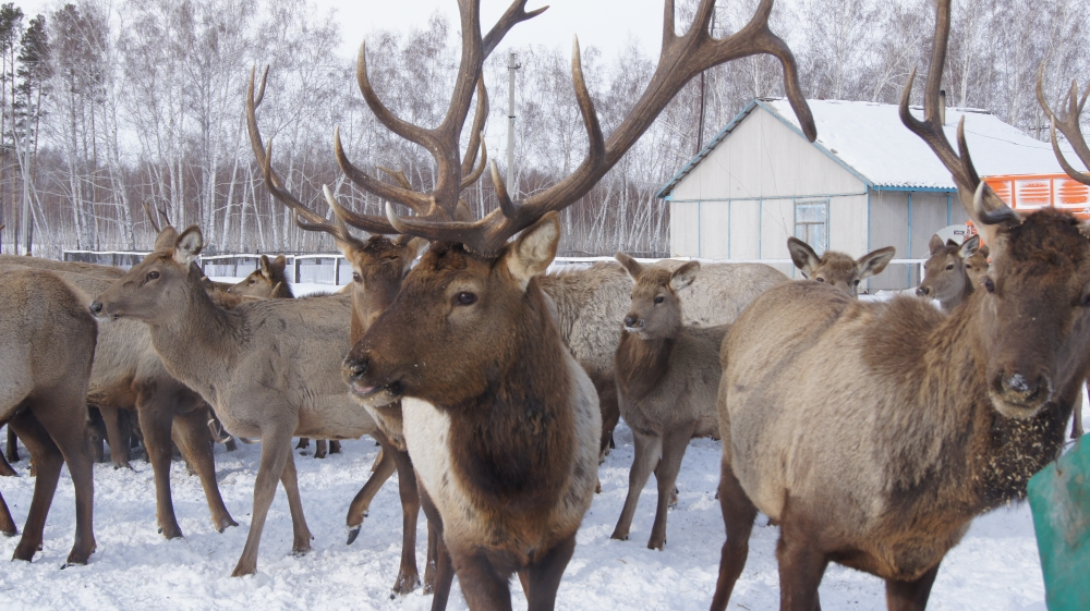 Солтүстік Қазақстан облысының табиғи ресурстар және табиғат ...